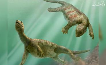 no shell oldest turtles found